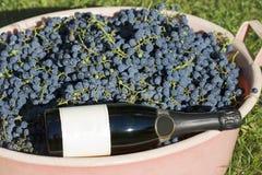 Uvas e frasco do champanhe Fotografia de Stock Royalty Free