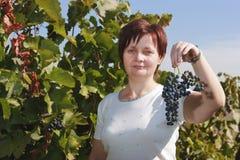 Uvas e vintage Imagem de Stock