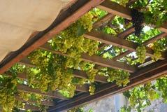 Uvas em Greece Fotografia de Stock