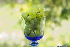 Uvas em um vidro Imagens de Stock