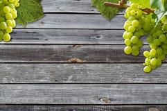 Uvas em uma vinha com fundo de madeira imagens de stock royalty free