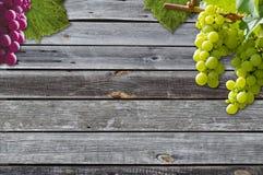 Uvas em uma vinha com fundo de madeira imagem de stock