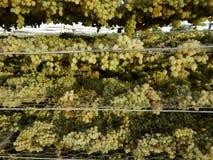 Uvas en el estante de sequía Imagen de archivo libre de regalías