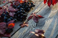 Uvas en el vector Foto de archivo libre de regalías