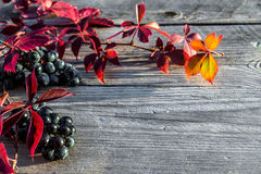 Uvas en el vector Fotografía de archivo libre de regalías