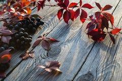 Uvas en el vector Imagen de archivo libre de regalías
