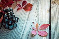 Uvas en el vector Fotos de archivo