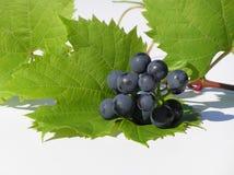 Uvas en la hoja Imágenes de archivo libres de regalías