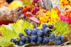 Uvas en las hojas de la vid Foto de archivo libre de regalías