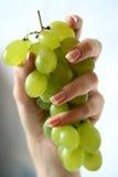 Uvas en manos femeninas Fotos de archivo