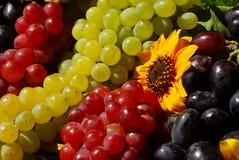 Uvas en rectángulo de la fruta de la vendimia Foto de archivo
