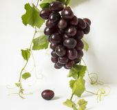 Uvas en un fondo blanco Un manojo de uvas uvas, hojas del verde Uvas azul marino Foto de archivo