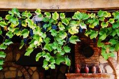 Uvas en viñedo viejo fotografía de archivo