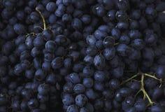 Uvas escuras do fundo do vinho tinto azuis imagem de stock