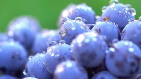 Uvas Uvas escuras para a produção de vinho 120 fps Tiro macro video estoque