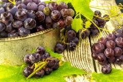 Uvas frescas azules en cuenco viejo del metal Fotos de archivo libres de regalías