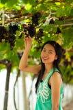 Uvas hermosas de la cosecha de la mujer de Asia. Imagen de archivo