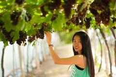 Uvas hermosas de la cosecha de la mujer de Asia. Fotos de archivo libres de regalías