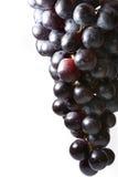 Uvas isoladas no branco fotos de stock royalty free