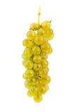 Uvas isoladas no fundo branco Imagem de Stock