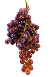 Uvas isoladas no fundo branco Foto de Stock Royalty Free