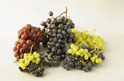 Uvas jugosas o un marco con la uva en el blanco Imágenes de archivo libres de regalías