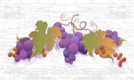 Uvas luminosas na videira Fotos de Stock Royalty Free