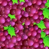 Uvas maduras Foto de archivo