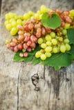 Uvas maduras em uma tabela de madeira fora Uvas ricas frescas no Fotografia de Stock Royalty Free