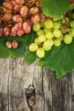 Uvas maduras em uma tabela de madeira fora Uvas ricas frescas no Imagem de Stock Royalty Free