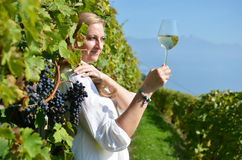 Uvas maduras Lavaux, Suíça Imagem de Stock Royalty Free