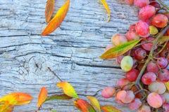 Uvas maduras y hojas caidas en la tabla de madera vieja Concepto - bri Foto de archivo libre de regalías