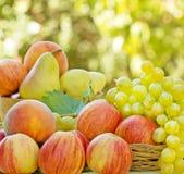 Uvas, manzanas y peras Foto de archivo libre de regalías