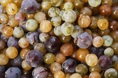 Uvas mezcladas coloridas fotografía de archivo libre de regalías