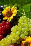 Uvas na caixa da fruta do vintage Imagem de Stock Royalty Free
