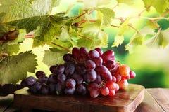 Uvas nas folhas de madeira da tabela e da uva Uvas para vinho saudáveis de fruto fresco Imagem de Stock
