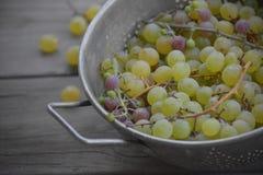 Uvas orgánicas frescas Fotos de archivo