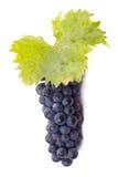 Uvas oscuras maduras con las hojas Imagen de archivo libre de regalías