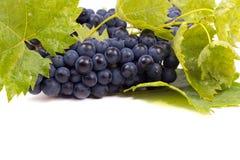 Uvas oscuras maduras con las hojas Foto de archivo libre de regalías