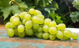 Uvas para vinho brancas dos frutos saudáveis na tabela de madeira na videira Imagens de Stock Royalty Free