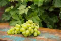Uvas para vinho brancas dos frutos saudáveis na tabela de madeira na videira Foto de Stock