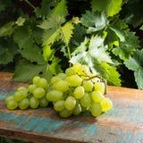 Uvas para vinho brancas dos frutos saudáveis na tabela de madeira na videira Imagens de Stock