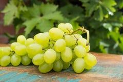Uvas para vinho brancas dos frutos saudáveis na tabela de madeira na videira Fotografia de Stock Royalty Free