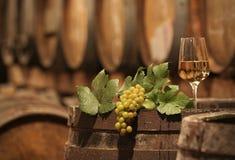 Uvas para vinho em uma adega de vinho Fotografia de Stock Royalty Free