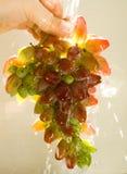 Uvas que se lavan Fotografía de archivo