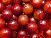 Uvas rojas Fotografía de archivo libre de regalías