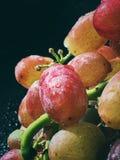 Uvas rojas dulces deliciosas escogidas y lavadas recientemente Foto de archivo