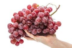Uvas rojas en la palma imagen de archivo libre de regalías