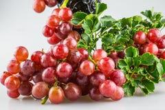 Uvas rojas maduras frescas con el fondo blanco Imágenes de archivo libres de regalías