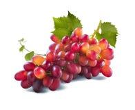 Uvas rojas manojo largo y hojas aislados en el fondo blanco Foto de archivo libre de regalías